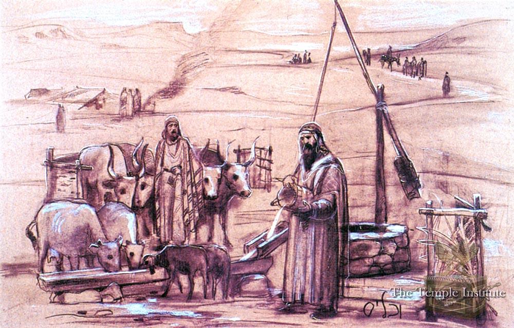 Watering livestock on Shabbat