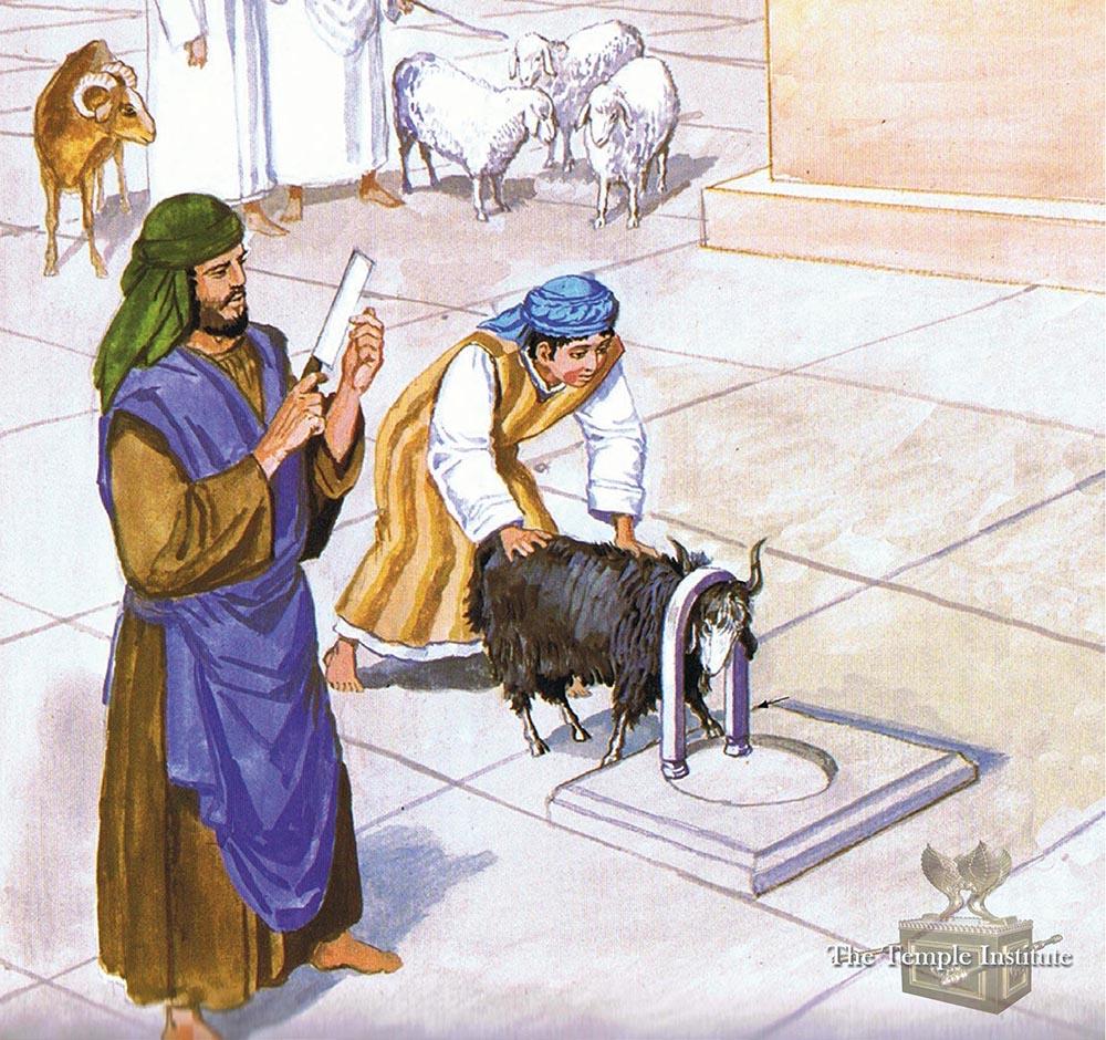 Restraining the Psssover lamb