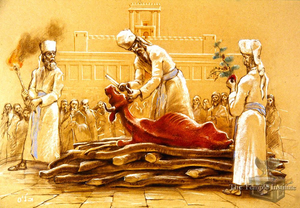 Slaughtering the Red Heifer