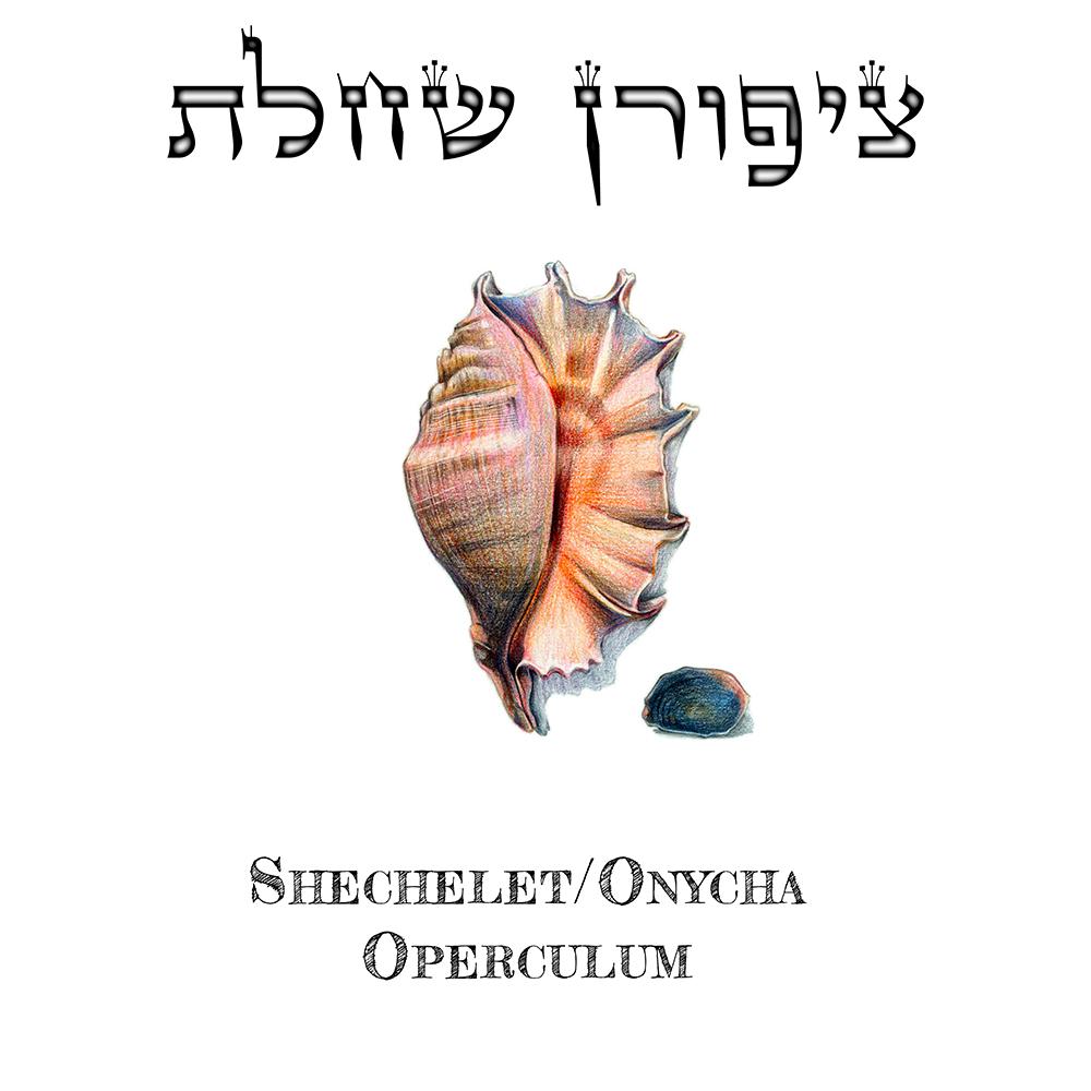 Shechelet