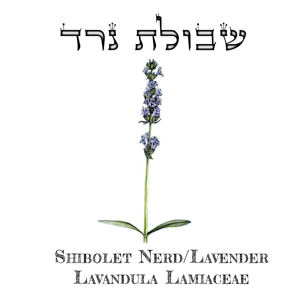 Shibolet Nerd 2